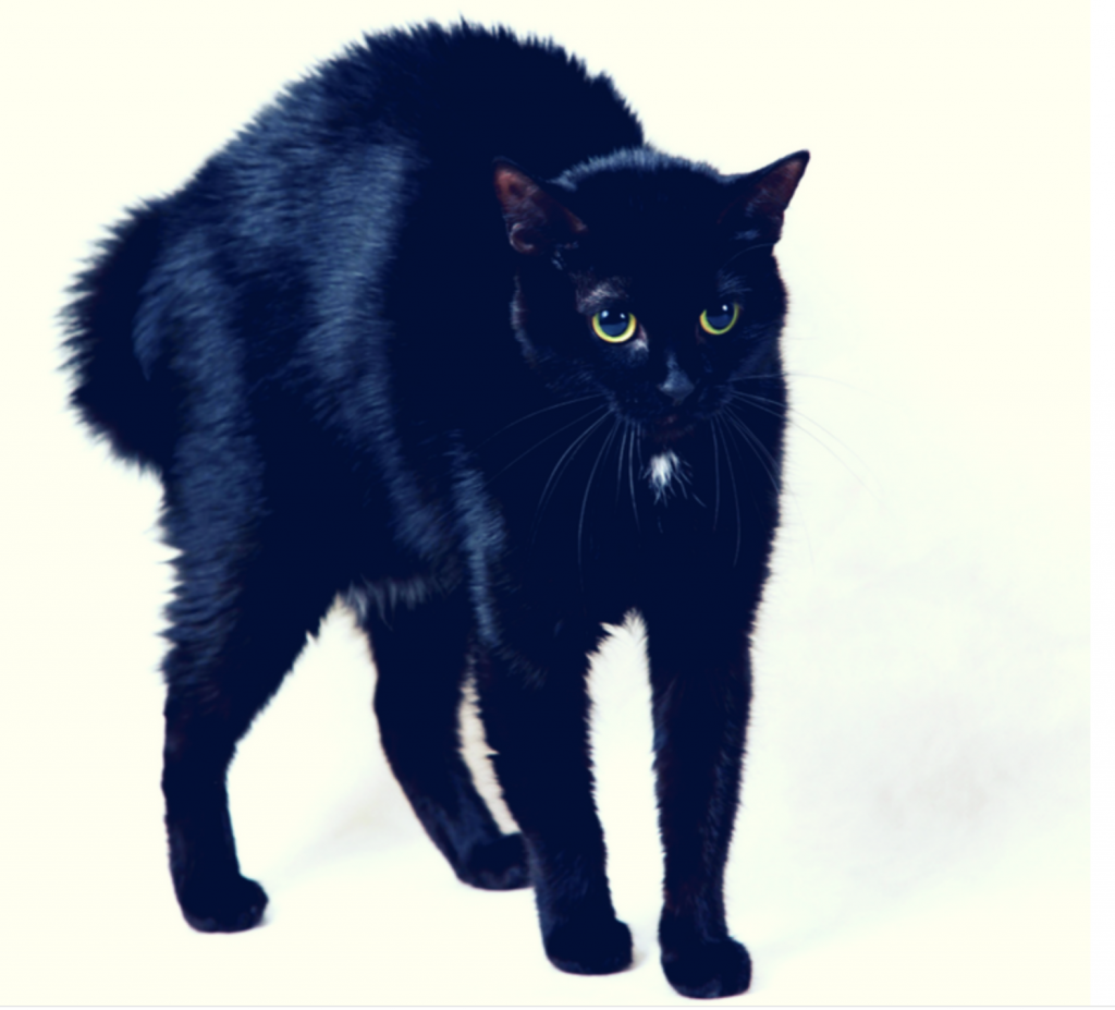 scaredy cat, cats and spirits, psychic cats